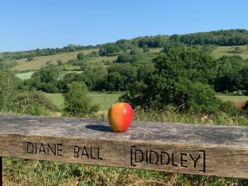An Apple on Diddley's Bench.