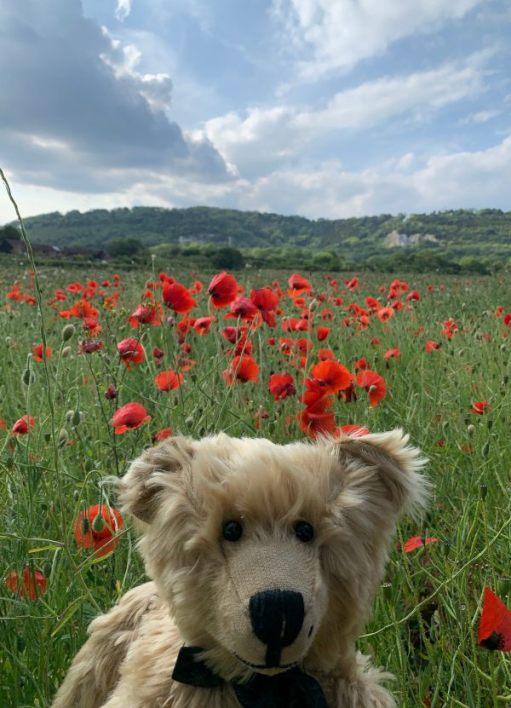 Bertie in a field of Poppies.