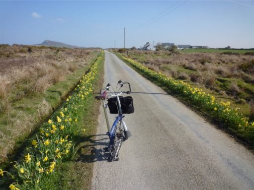 March 2011. North Pembrokeshire. NCN Route 4. St David's to Fishguard. Near Strumble Head.