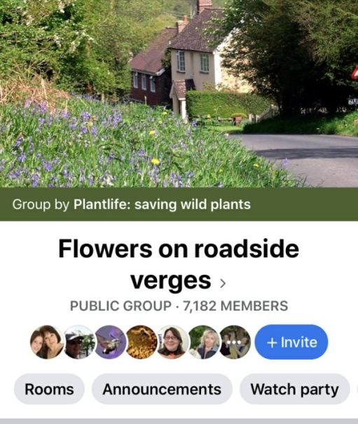 Header from the Flowers on Roadside Verges Facebook Group. Click for link.