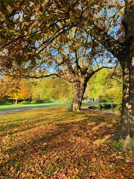 Cardiac Rehab. Autumn. Morden Hall Park. Walking to St George's.