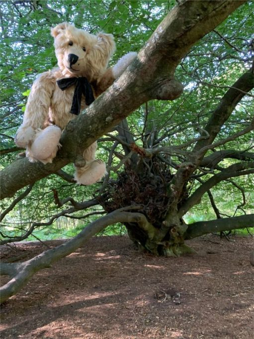 """Bertie in the """"Witches Broom"""" Tree."""