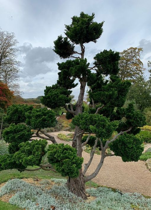 Wisley Titbits: The Exotic.