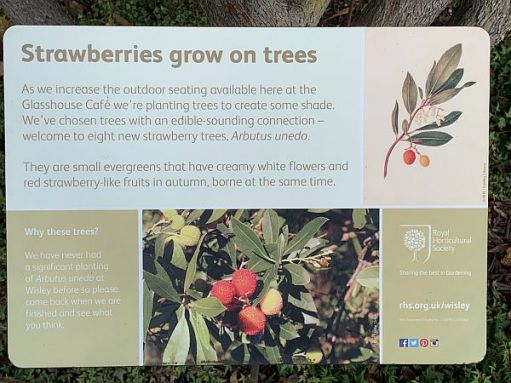 Wisley Titbits: In the Café Garden. Strawberries grow on Trees.