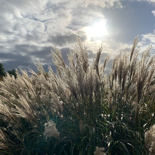 Wisley Titbits: The Grass.
