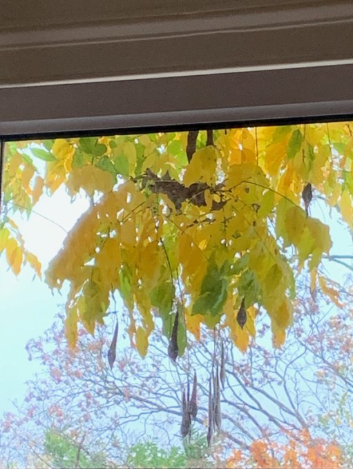 Close up of the Wisteria in the window.