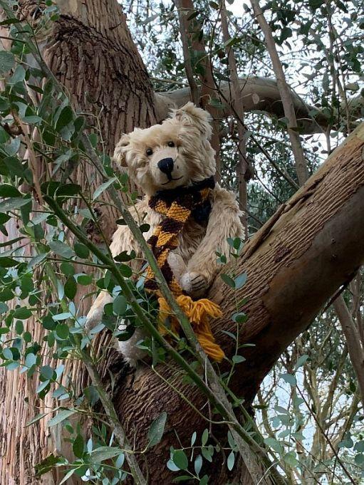 Bertie up a Gum tree.