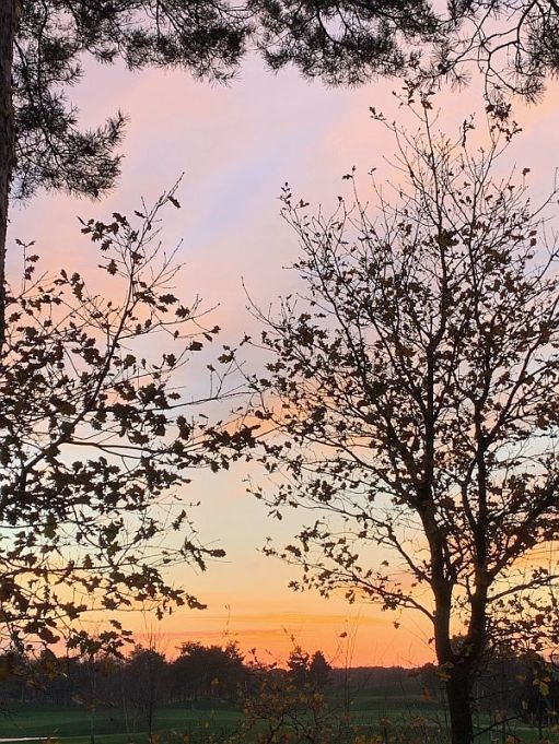 Trees silhouetted in the sunset.