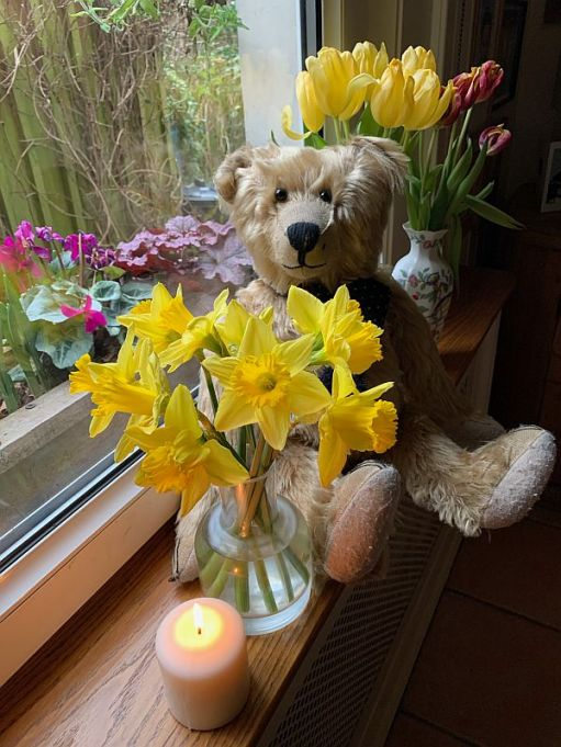 Bertie sat on the window cill in Laurel Cottage in front of two vases of tulips and a vase of daffodils with a candle lit for Diddley in front.