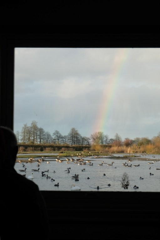 Looking out of the window of Swan Lake Hide, Slimbridge. A lovely rainbow coming down the middle of the photograph.