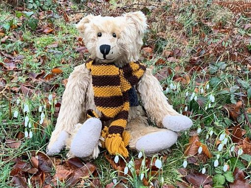 Bertie sat amongst the snowdrops, wearing his Sutton United scarf.
