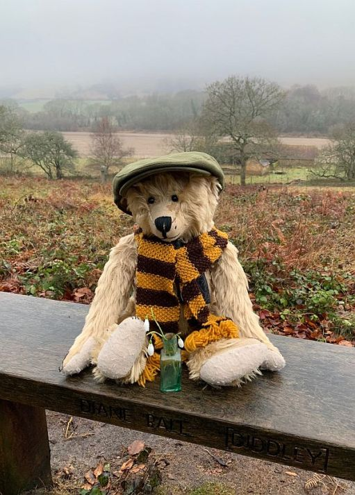 Bertie sat on Diddley's bench wearing his Sutton United scarf and Bobby's cap. A small vase on snowdrops on the bench in front of him.