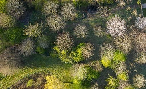 Aerial view of the Wildlife Garden at Rools-Royce, Goodwood.