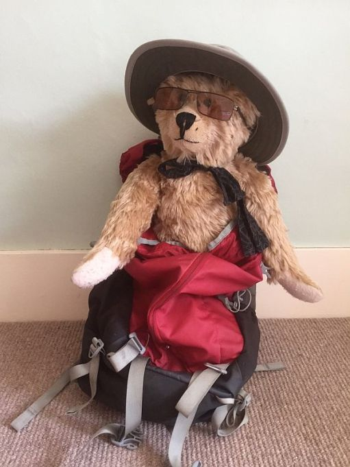 Bertie wearing an 'at and packed in the rucksack!