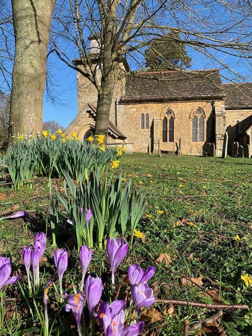 Purple crocuses in the grounds of Wotton Church.