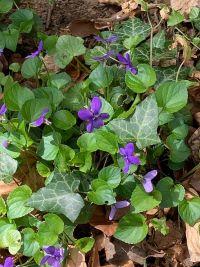Update. Wild Violet.