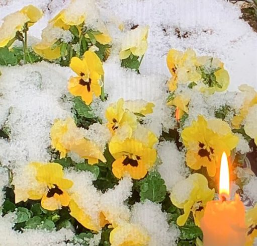 A candle lit for Diddley amongst some snow covered yellow pansies.