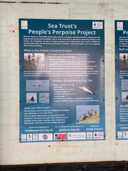 Sea Trust's People's Porpoise Project.