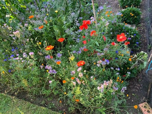 Queen Victoria's wildflower extravaganza. Beautiful, and buzzing with insects.