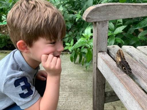 """Jay studying a Butterfly with big """"eyes""""."""