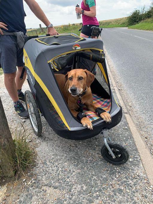 Peppa the dog in her trike.