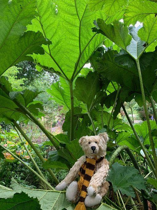Bertie in the Giant Rhubarb.