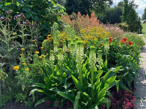 Flowers aat Wisley Gardens.