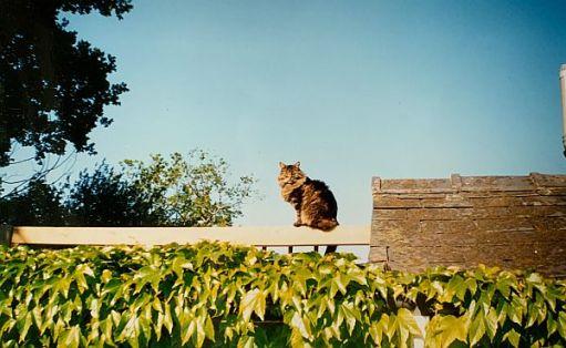 Frank sat up on the pergola.