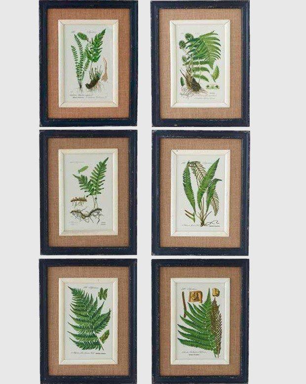 black-framed-fern-prints-set-of-6_2