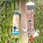 mindfulness of birds