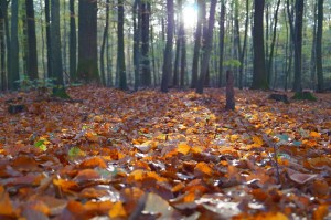 Autumn Mindfulness Course St Albans