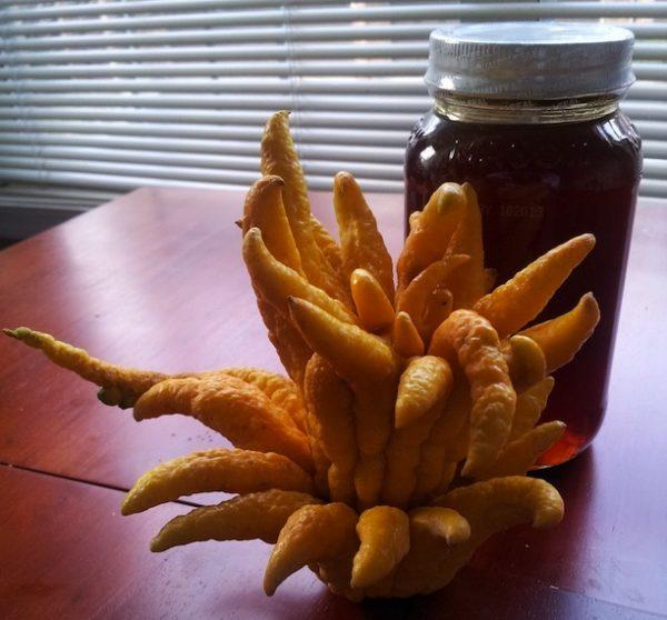 buddha_hand_fruit