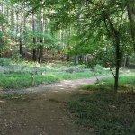 Chattahoochee greenway trail