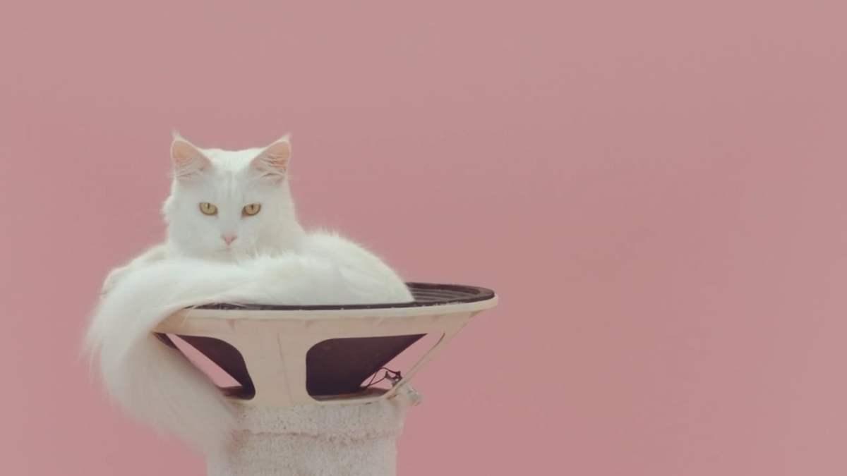 Manchmal reicht eine Katze im Lautsprecher als Musikvideo