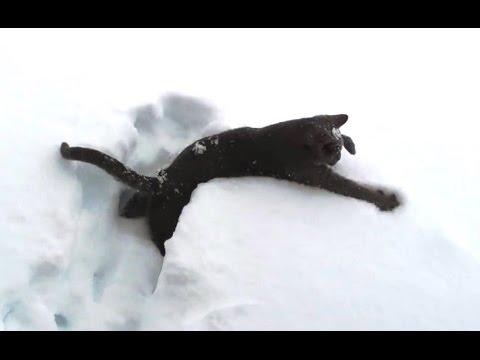 Katzen erfahren zum ersten Mal Schnee!