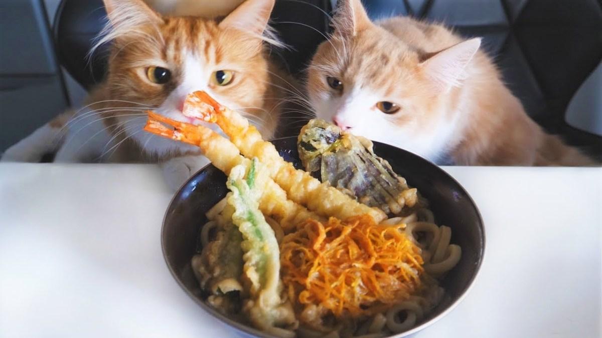 Katzen schauen ihrem Herrchen beim Zubereiten von Tempura Udon Nudeln zu