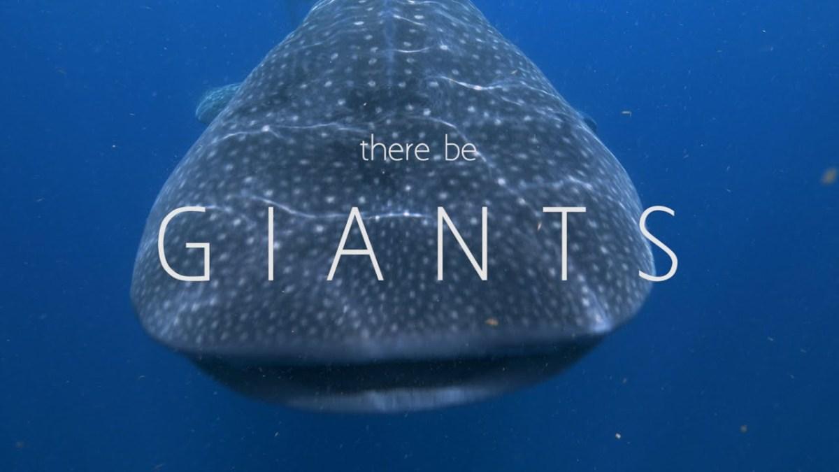 """""""There Be Giants"""" – eine kurze Doku über die Walhaie vor der Isla Mujeres"""