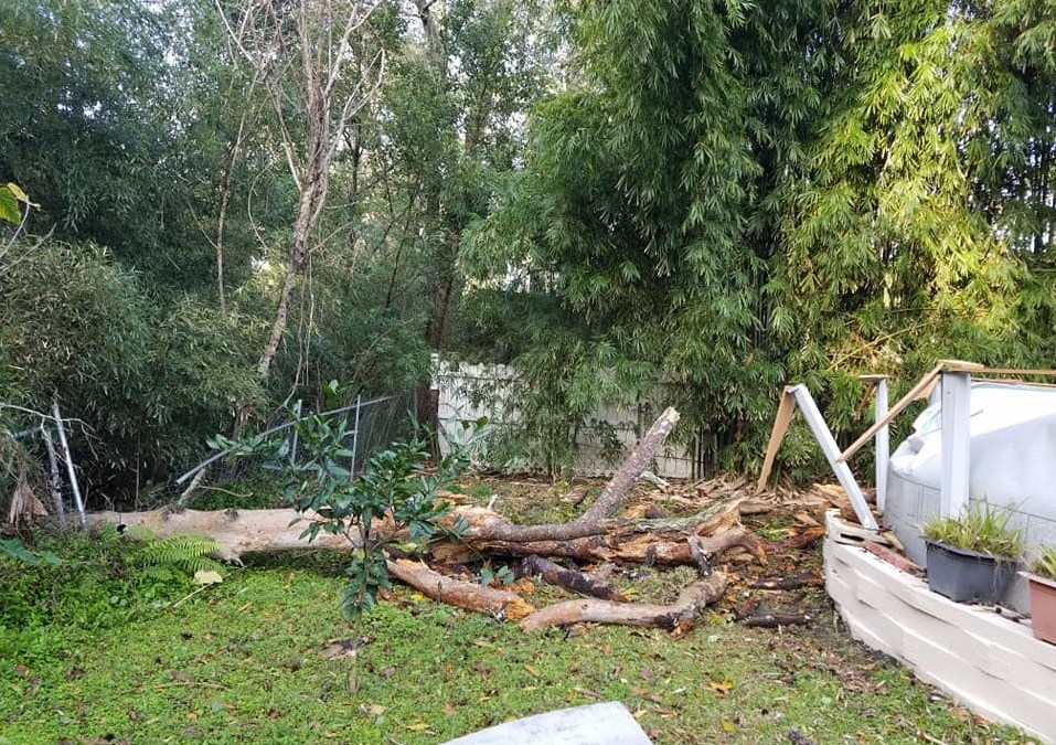 VS. The Fallen Pine Tree – Restore the Backyard Part 1