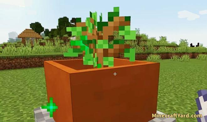 Botany Trees 4