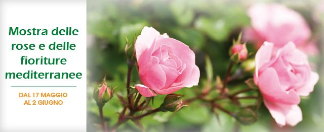 img_evento_rose_14