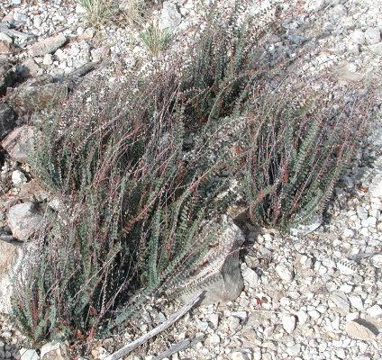 desert fern on marble