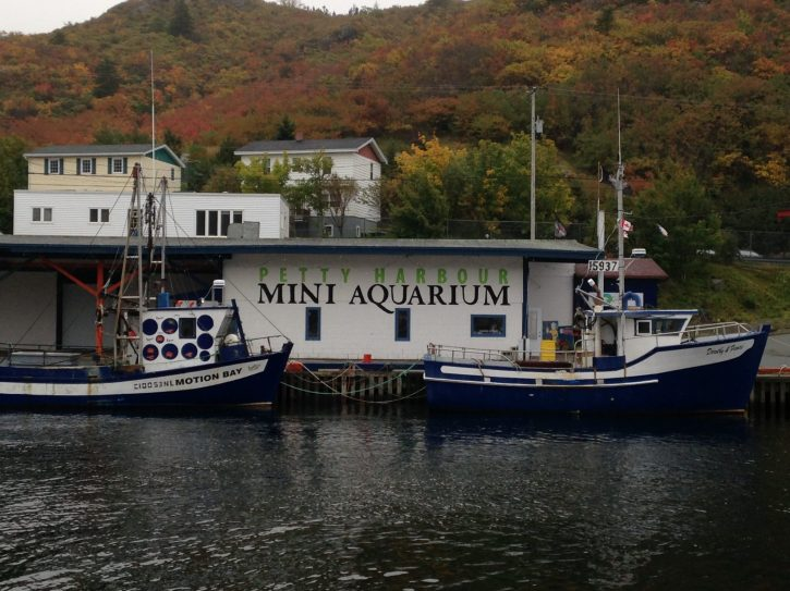 Petty Harbour Mini Aquarium
