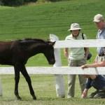 foal days