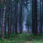 A Bristol Group Is Planning A Haunted Forest