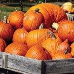 Decorate A Pumpkin In Bristol For Free