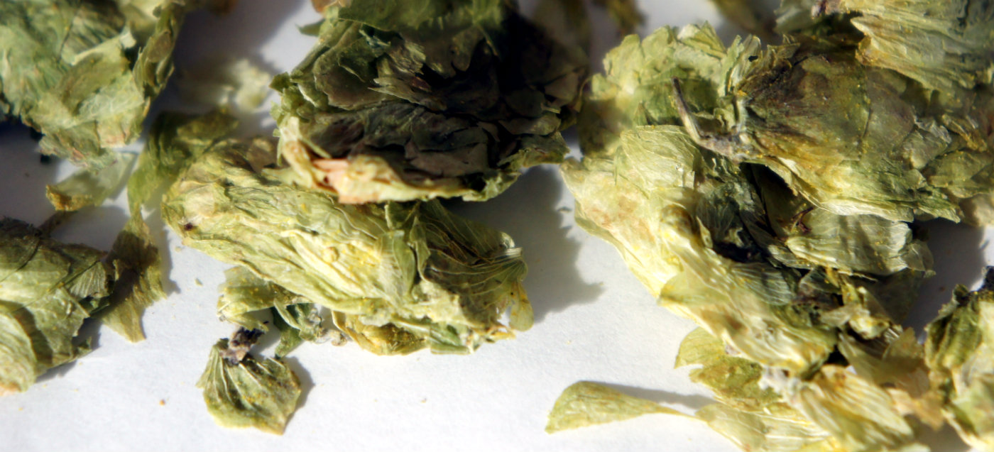 Earthy and spicy Fuggle hops