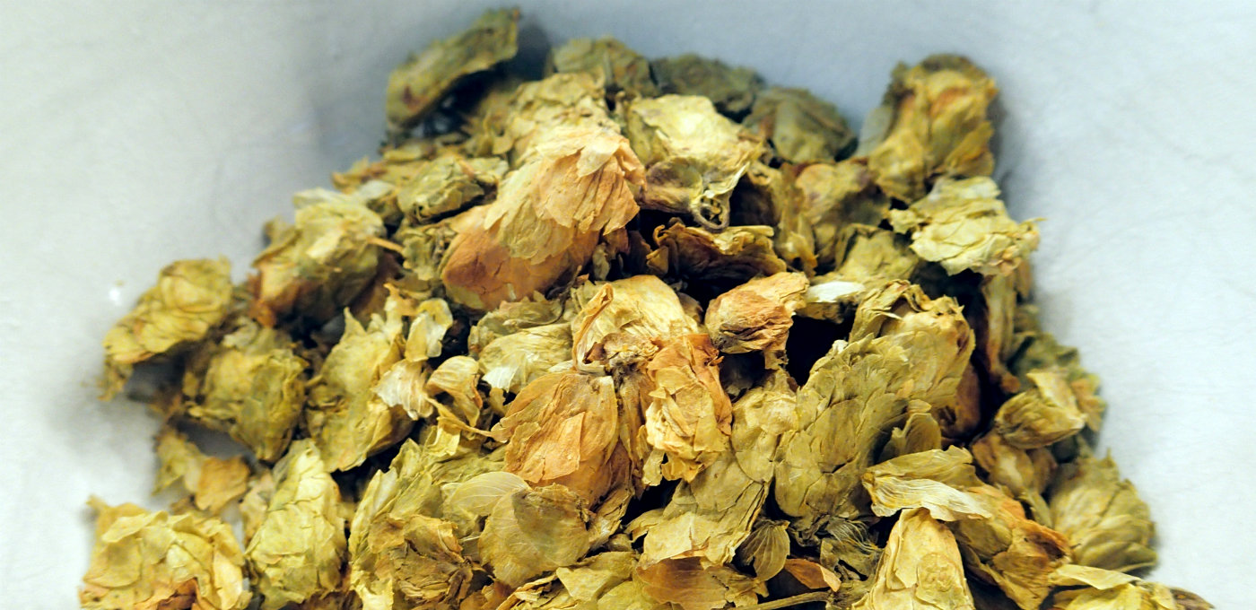 Fuggle hops prior to adding to the wort