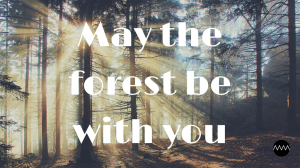 forest and sunlight with quote 'may the forest be with you'
