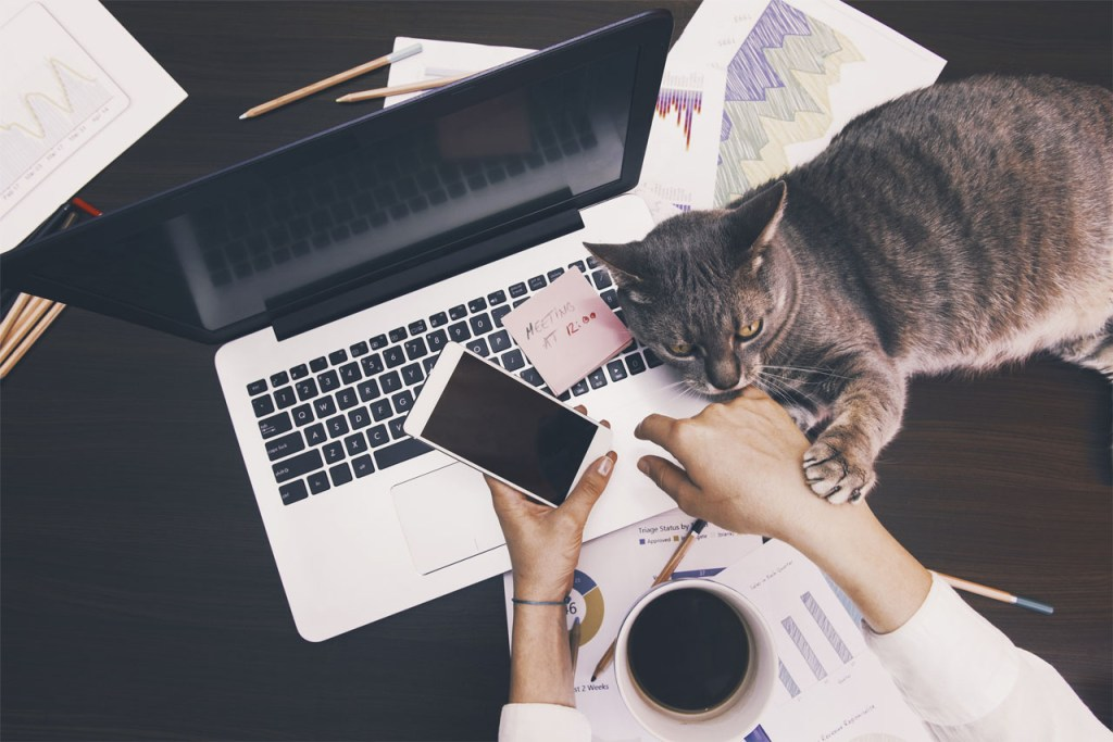 woman working home office laptop smartphone coffee cat Tips on Working from Home %page