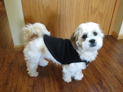 Homemade Dog Jacket